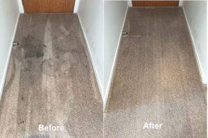 apartment carpet